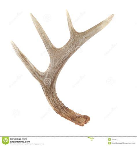 deer antler deer horn clipart clipart suggest