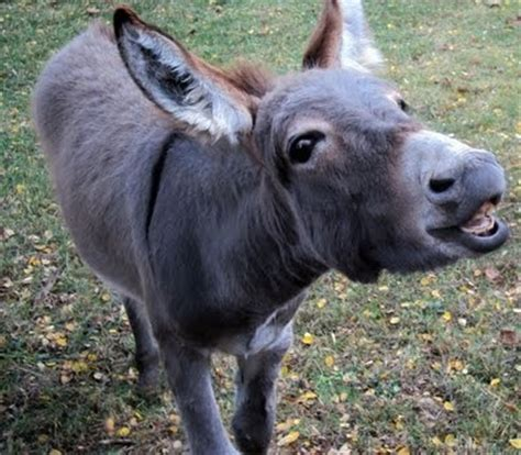 pictures of pictures of donkeys
