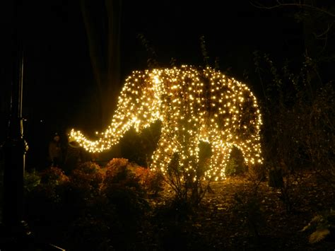 national zoo zoo lights zoo lights at the national zoo