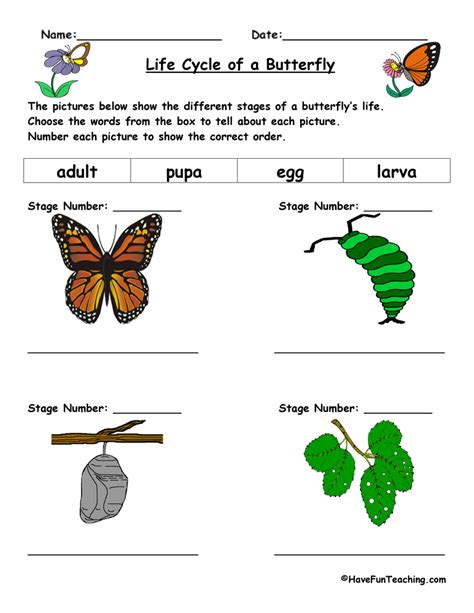 of a butterfly cycle of a butterfly worksheet teaching