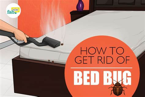 Get Rid Of Bed Bugs Fast by How To Get Rid Of Bed Bugs Fast And Permanently Make Your