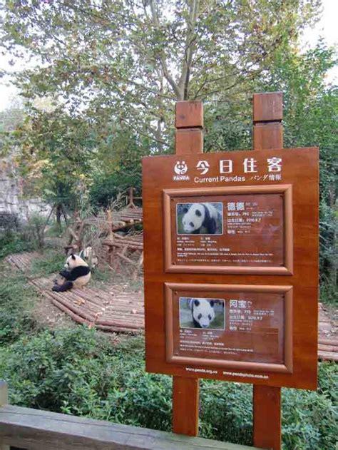 cam directo entradas ya pod 233 is seguir en directo nuestra panda cam zoo