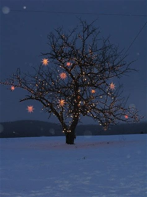how to wrap lights around tree branches hometalk how to wrap lights around trees