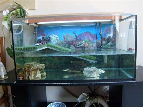 am 233 nagement d 233 co aquarium tortue d eau