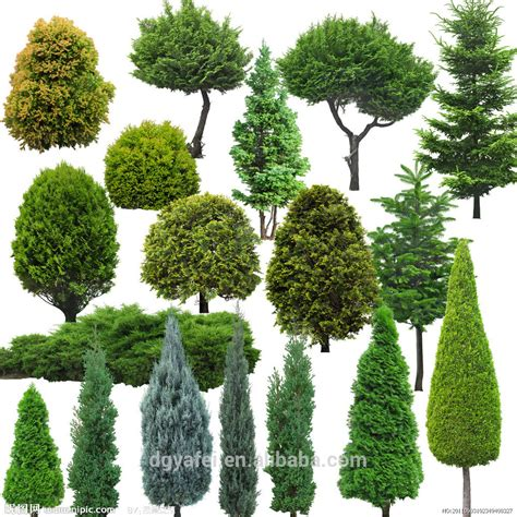 type of trees different types of plants and trees outdoor artificial