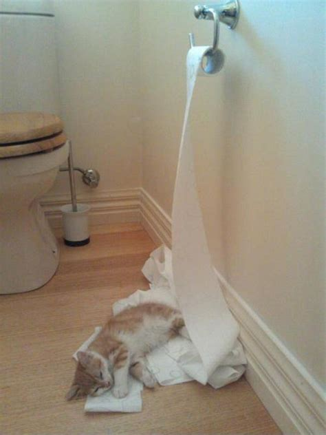 Toilet Paper Backwards by Toilet Paper Saving Tip For Cat Owners Blogitude