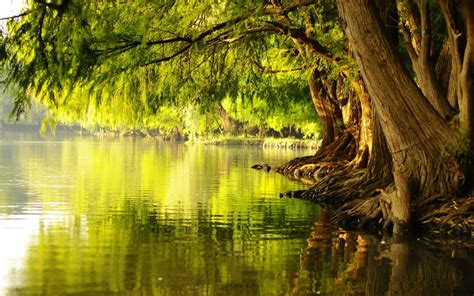 tree water planted by the river fruit of self teach the