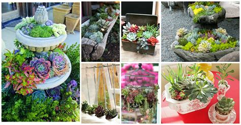 succulent planter ideas 24 cheap planter ideas for amazing succulent garden