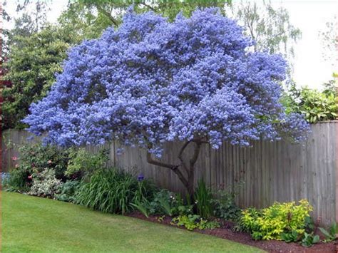 small flowering trees for small gardens evergreen trees for small gardens uk garden ideas