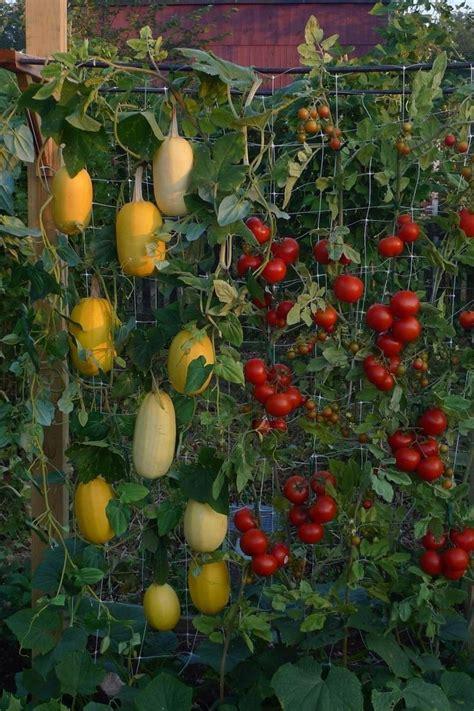 growing vegetable garden how to build a vertical vegetable garden gardens