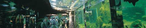 aquarium du p 233 rigord noir lascaux dordogne vos vacances en p 233 rigord noir