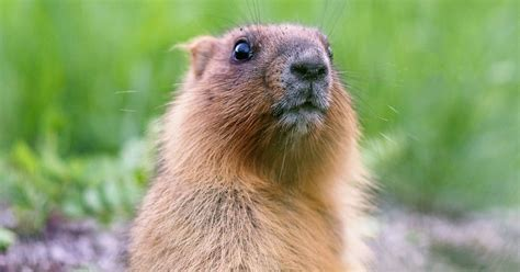 groundhog day meaning in groundhog day roots astronomy spiritual meaning