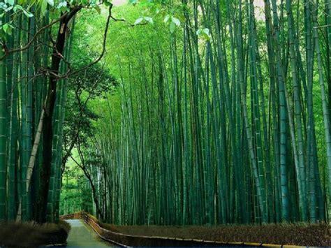 Der Garten Vom Schatten Ins Licht by Der Bambus Garten Kann Einem Den Atem Rauben