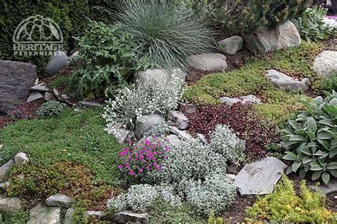 best plants for rock gardens american rock garden society perennial gardening