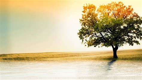 wallpapers of tree 40 hd tree wallpapers backgrounds for free