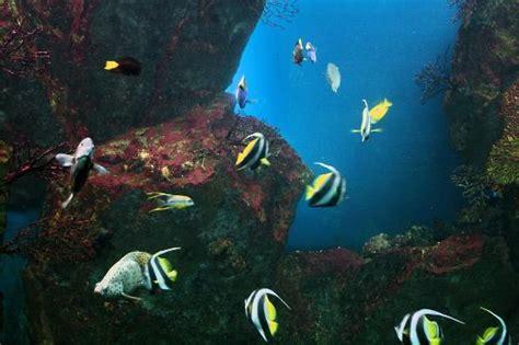 aquarium malo jeu pour enfants picture of grand