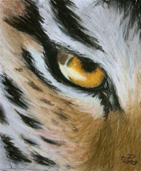 tigers eye drawing of a tiger eye www pixshark images
