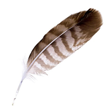 feather with feather pictures images and stock photos istock