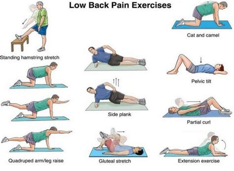low back the definitive guide to lower back relief at home