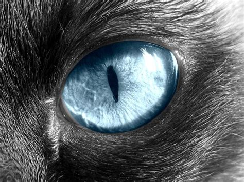 cat eye cat eye by charlopunk on deviantart
