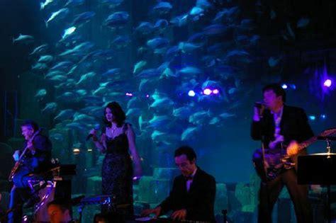 un requin picture of aquarium de cineaqua tripadvisor