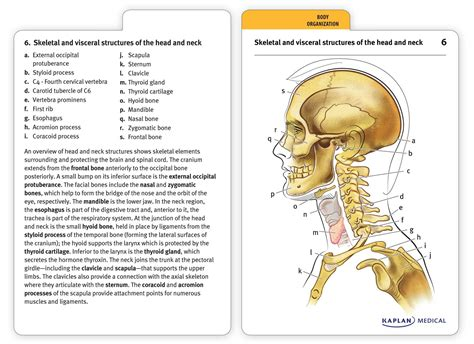 how to make anatomy flash cards anatomy flashcards book summary official