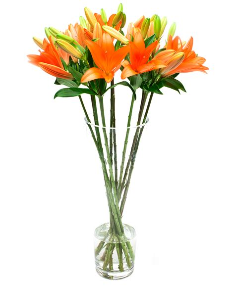 orange delivery weekly flower delivery lilies asiatic orange