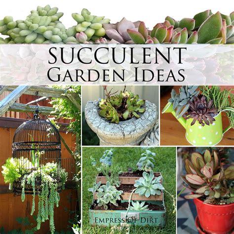 succulent garden ideas succulent garden ideas ebay