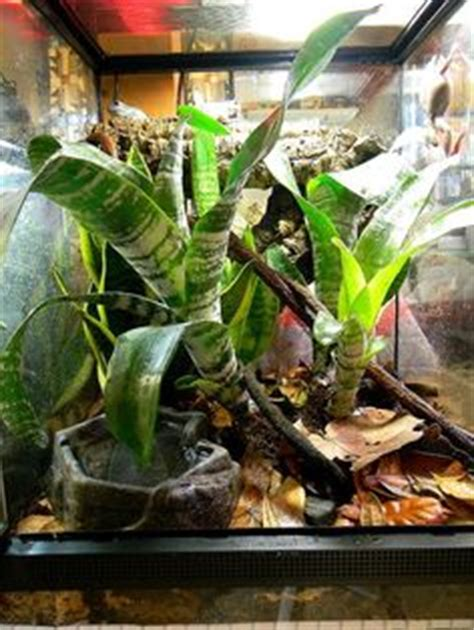tree set up 1000 images about frogs on vivarium frog