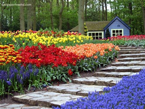 images of beautiful flower gardens my amazing things beautiful flower garden photos