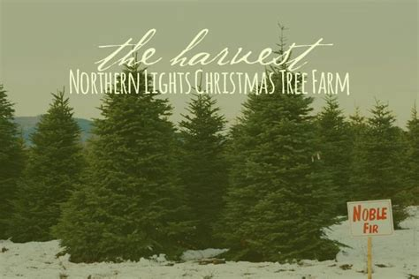 northern lights tree farm 17 best images about resurrecting a memory green tree