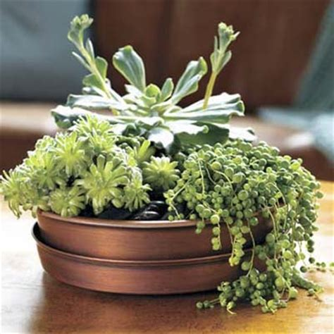 outdoor table centerpieces 2 plant a table centerpiece 75 outdoor upgrades for