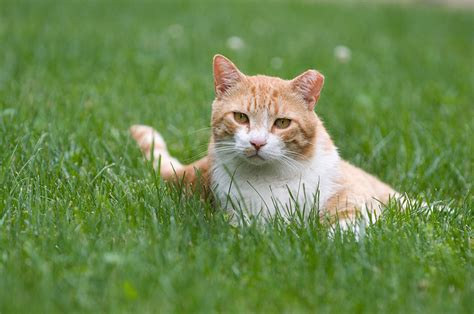 images cats managing community cats animal sheltering by the