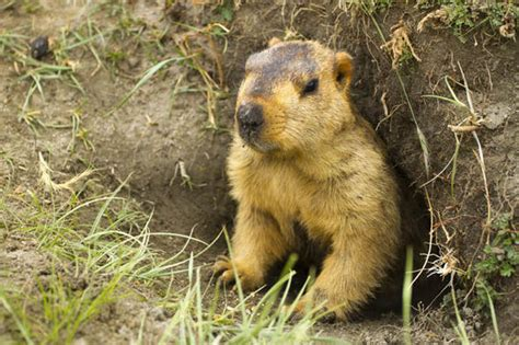 groundhog day of groundhog day 2017 what is groundhog day who is