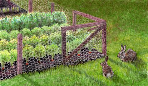 how to keep cats out of vegetable garden keeping rabbits out of the garden bonnie plants