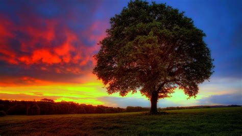 hd tree wallpaper 46 hd and qhd wallpapers of gorgeous trees 2