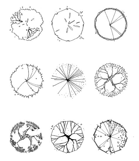 tree symbolism tree symbol in plan drawing cho hee song