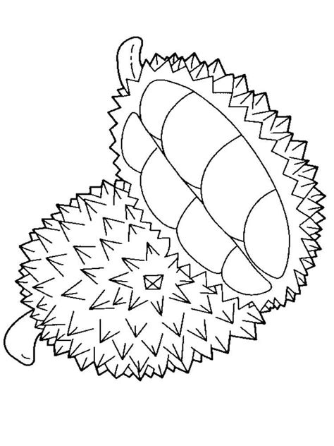 coloring book picture durian coloring pages and print durian coloring