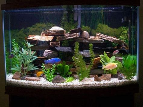 fish tank decoration ideas your home