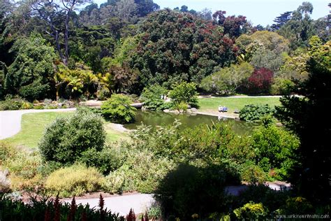 botanical gardens sf san francisco botanical garden sundays in my city