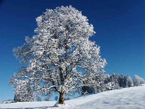 tree with snow the thing of the day snow the great eraser