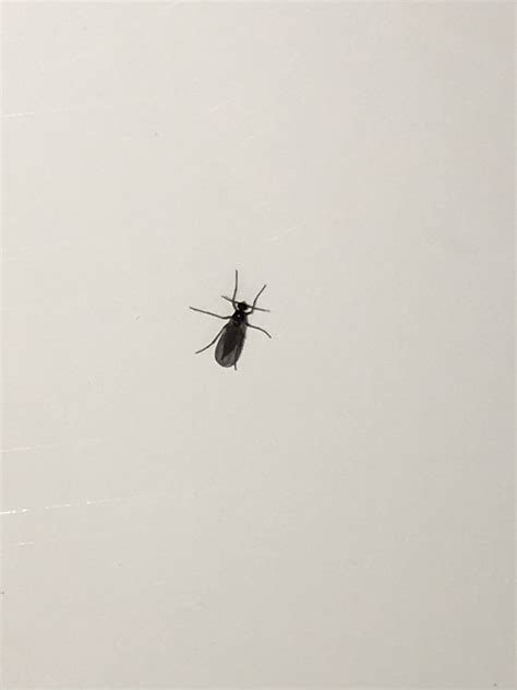 tiny flying insects in house small flying bugs gathering on bedroom windows updated