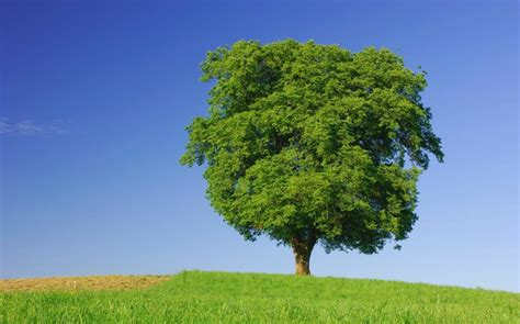tree pic do trees feelings one expert says they do