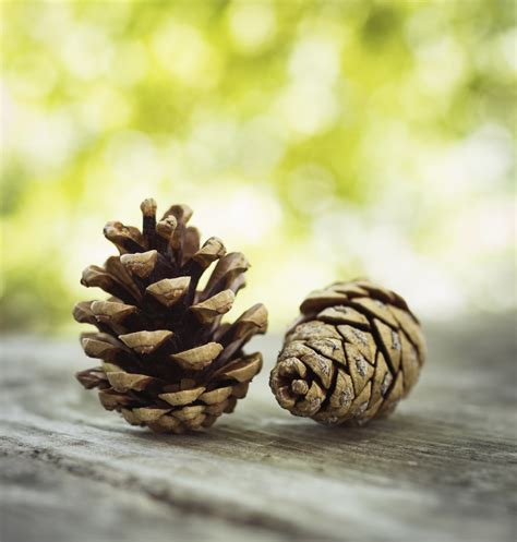 with pine cones 17 things to make with pine cones