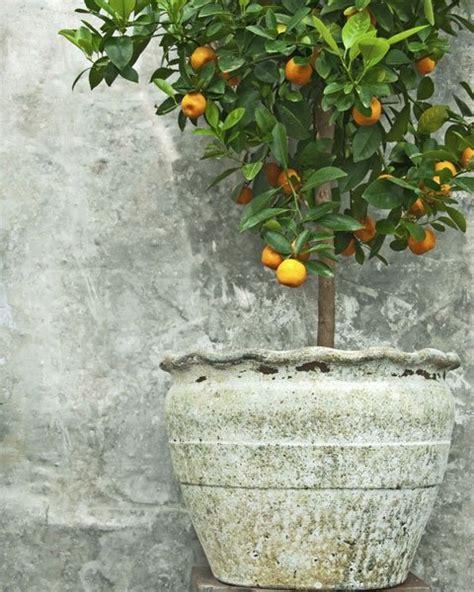 Die Garten Oder Der by Mediterranen Garten Anlegen Diese Pflanzen Und Deko