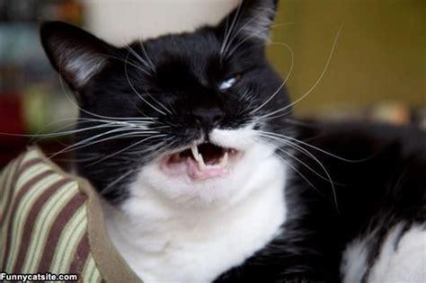 cat pictures ahh yarrrr