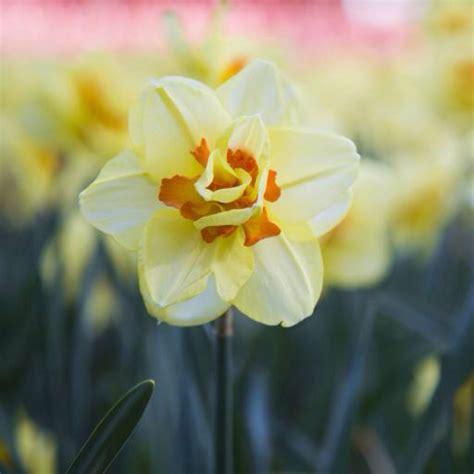 Der Blühende Garten by Pixwords Das Bild Mit Blume Blumen Natur Garten