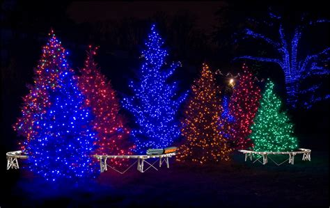 how to decorate a tree outside with lights how to put lights on outdoor trees lizardmedia co