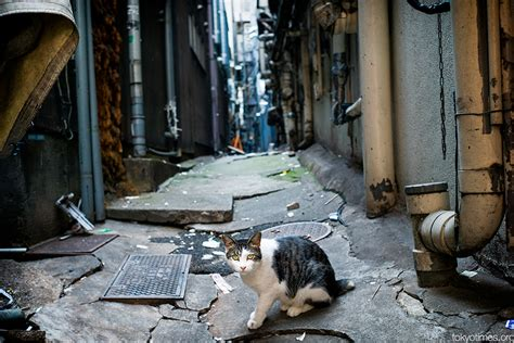 alley cat japanese alley cat tokyo times
