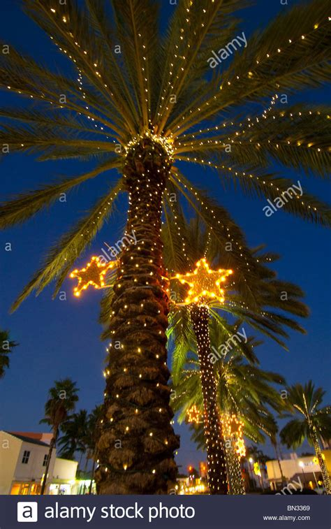 palm tree with lights palm tree www imgkid the image kid has it